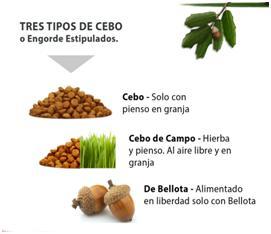 LEs différents types de Jambon ibérique espagnols